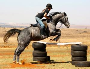 Jumping in a standing martingale for training purposes