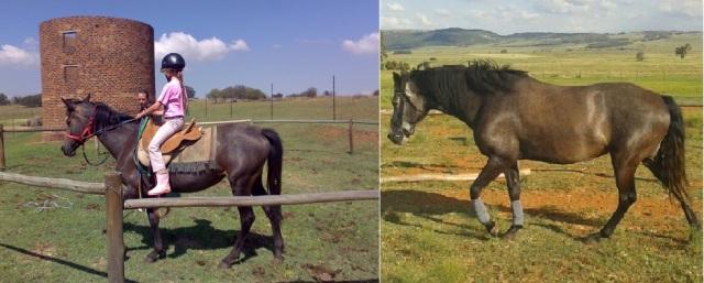 Arwen2008&2013