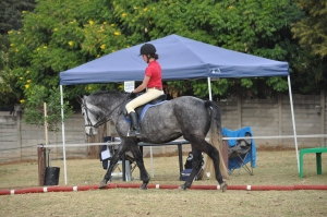 A perfect example of a horse doing a good medium walk with rider having newb moment