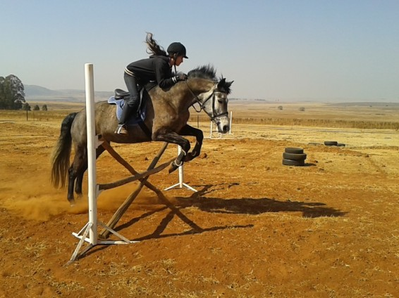 August 2014. My first time jumping anything bigger than 50cm in the K&M and it's showing. Already I'm giving her some more space with my hands, but my lower leg is on a mission of its own.