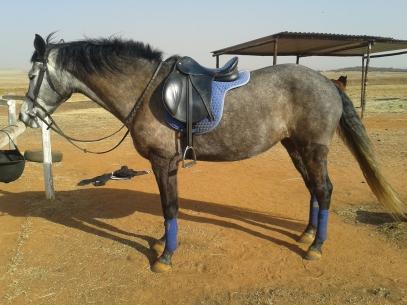 Saddle post ride