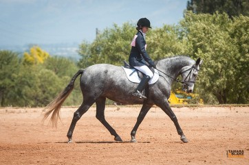 How not to dressage. (Proof that Arwen is a saint. Don't worry, we don't do this thing anymore).