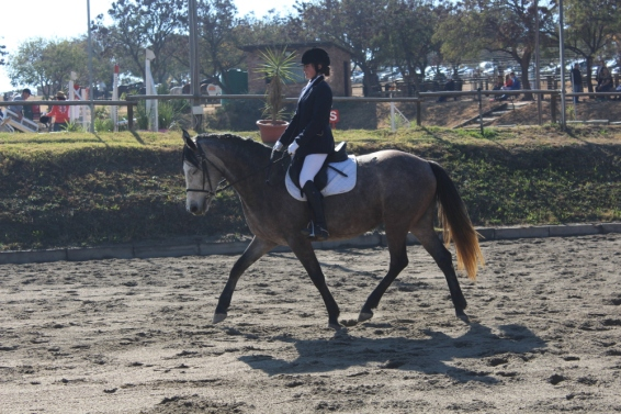 June 2015. Not Arwen, but a far younger and less experienced horse also doing her first Prelim test. Much of the niceness here can be attributed to Nell simply being fairly amazing, but I'm at least looking up, my legs are kind of behaving and, while my arms look awkward here, it's actually a good thing; it's just the moment of the rise that makes them look stiff, because they're really being supple and keeping my hands as still as possible.