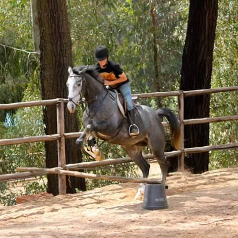 Probably the second time Magic ever saw a jump, before I even started leasing him. This must have been early 2012.